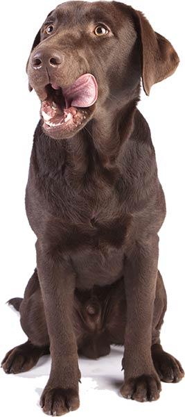 hund-lercker