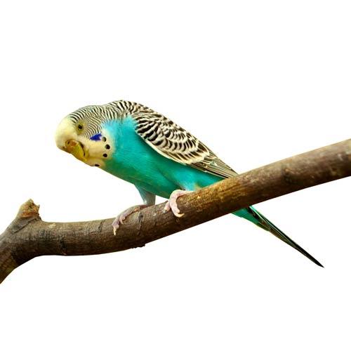 kanarienvogel-gleich